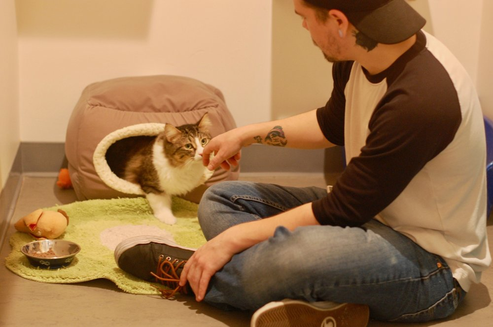 At Cat Town, Tesla was able to relax and learn to trust people. Photo by Cathy Niland.