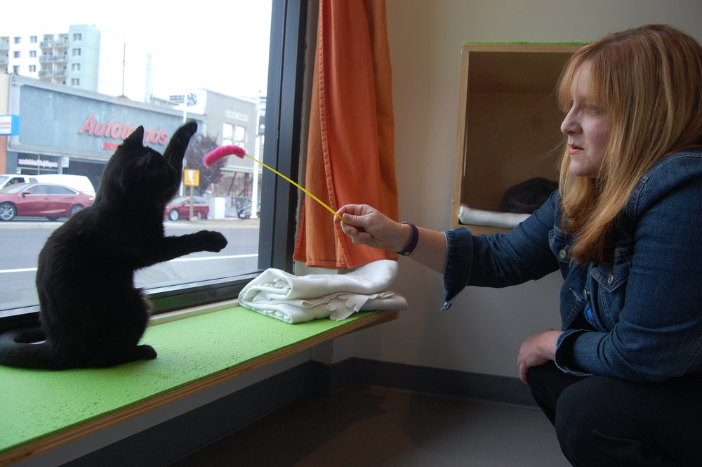 Hali helps 6-month-old Bozeman burn off his kitten energy at Cat Town.