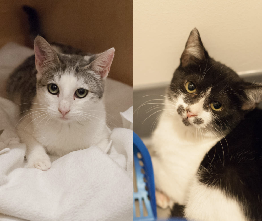 WINK AND NOD, 5 MONTHS, FEMALES, BONDED PAIR