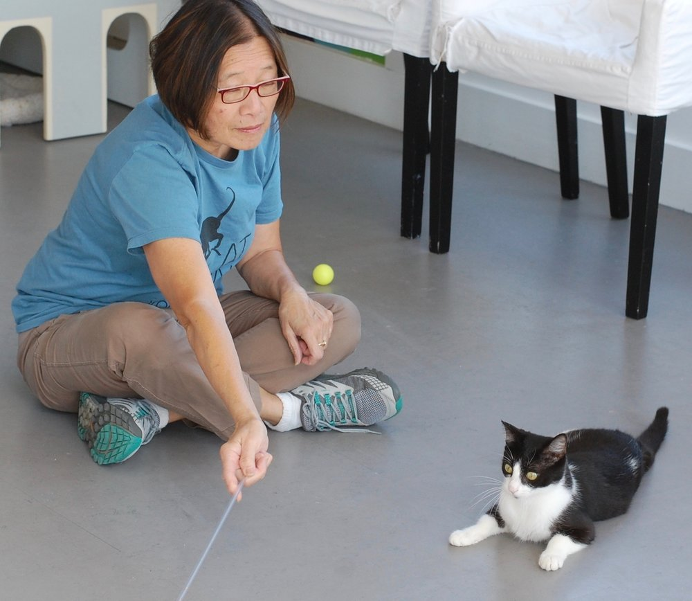 Like many of our volunteers, Mae uses play to help cats build confidence. Photo by Cathy Niland.