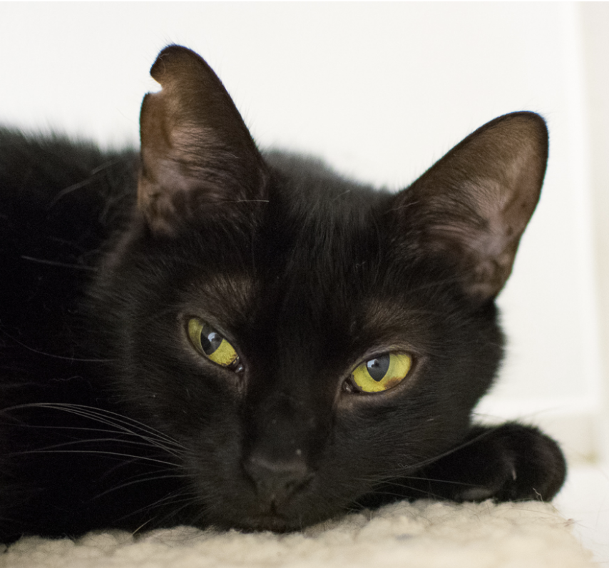 GORDON, 2 YEARS, MALE, BONDED PAIR WITH DAMIEN