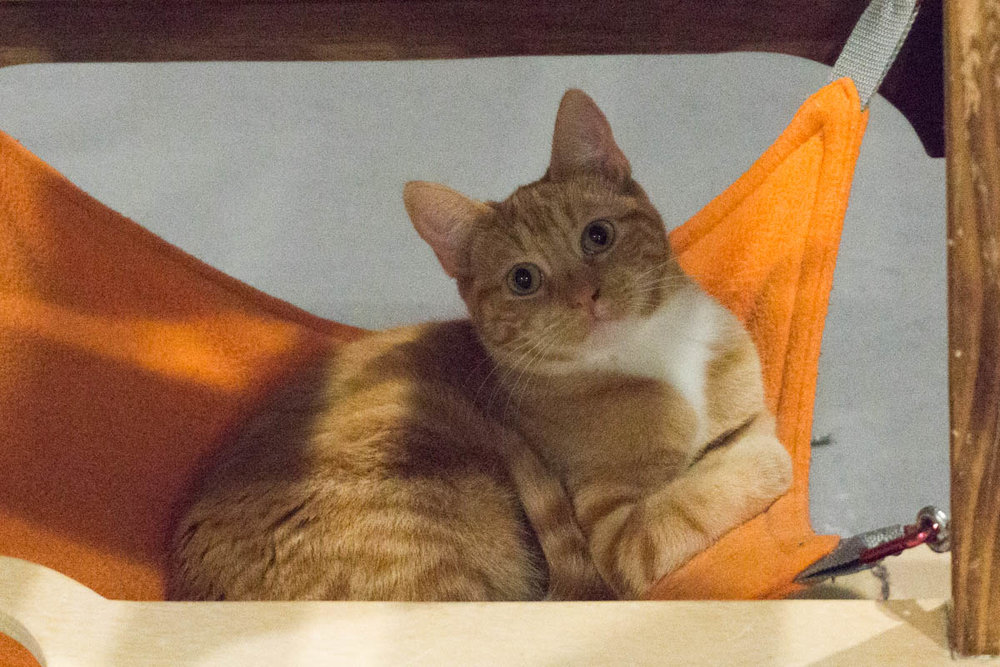 MARMALADE, 6 MONTHS,FEMALE, BONDED WITH WINNIE