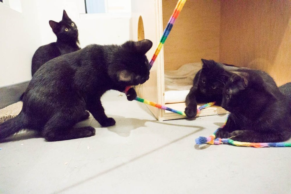 With their two brothers already adopted, sisters Monkey and Maru will rely on one another for lots of play time.