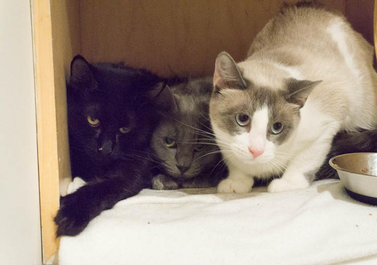 Sahara, India, and Geneva were surrendered from the same home, so we hope to keep them together.