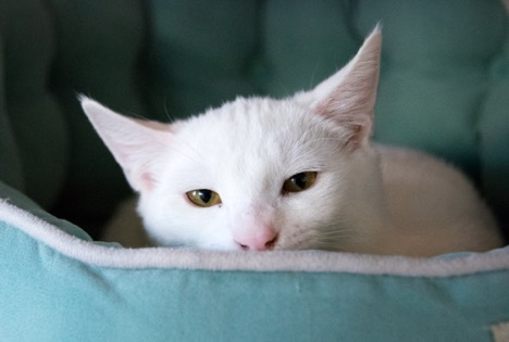 Providing under-socialized cats with a special place they can hide and feel safe, like a cozy covered bed, allows them to explore their new surroundings at their own pace.