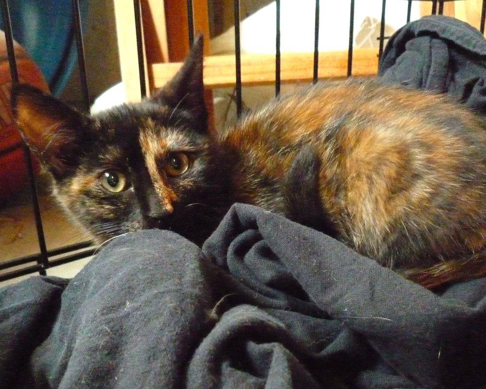 Orbea, before we earned her lifelong love.