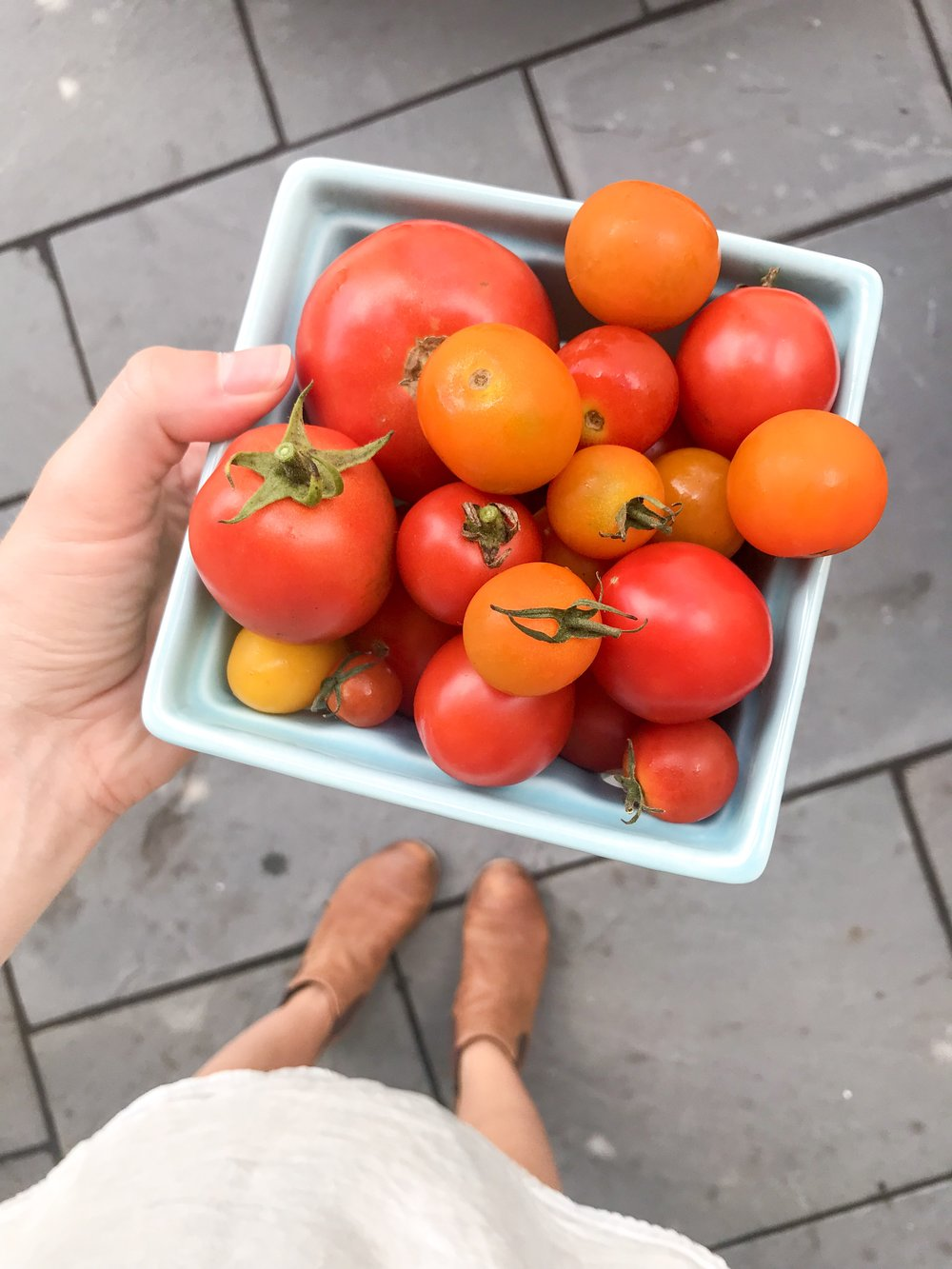 A Complete Guide To Container Gardening For Beginners - The Well Essentials