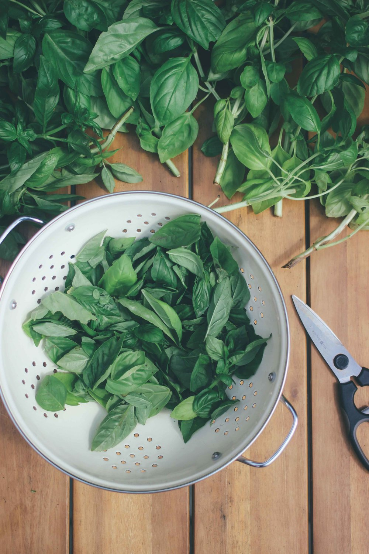 Authentic Homemade Italian Summer Pesto - The Well Essentials