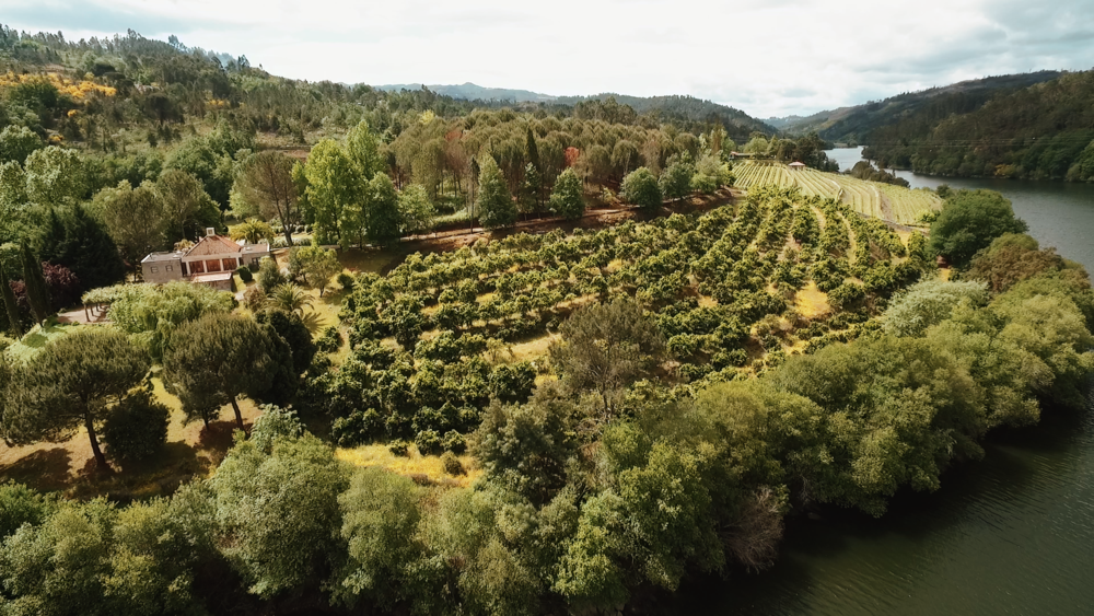 Douro Valley vineyards in Portugal as seen nearby luxury bed and breakfast outeiro tuias manor house