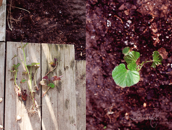 Sp-Seedlings-copy