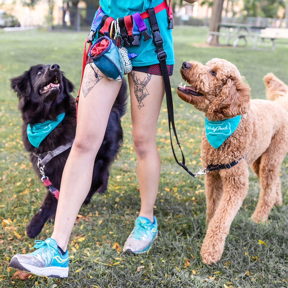 DOG WALKING SERVICES - {RATES}$22/walk | $20/walk for 4+ walks per weekWe believe in walking dogs in a neighbourhood (our beloved Liberty Village) that we know inside and out to ensure varied routes. We only walks dogs in small groups of four with the highest safety protocols possible, including hot and cold weather protocols to keep your dog safe and comfortable always.We provide daily reporting through photos and videos sent directly to you so you can experience your dog's fun even if you're at work and go out of our way to create interactive activities to help exercise doggy brains too! Our experienced team become 'aunties' and 'uncles' to your dog — true extended family members who keep tabs on your dogs mood, training, emotional state and physical exercise. In short, we love them as our own!