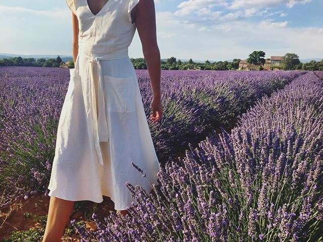 Lavender fields outside Bonnieux.