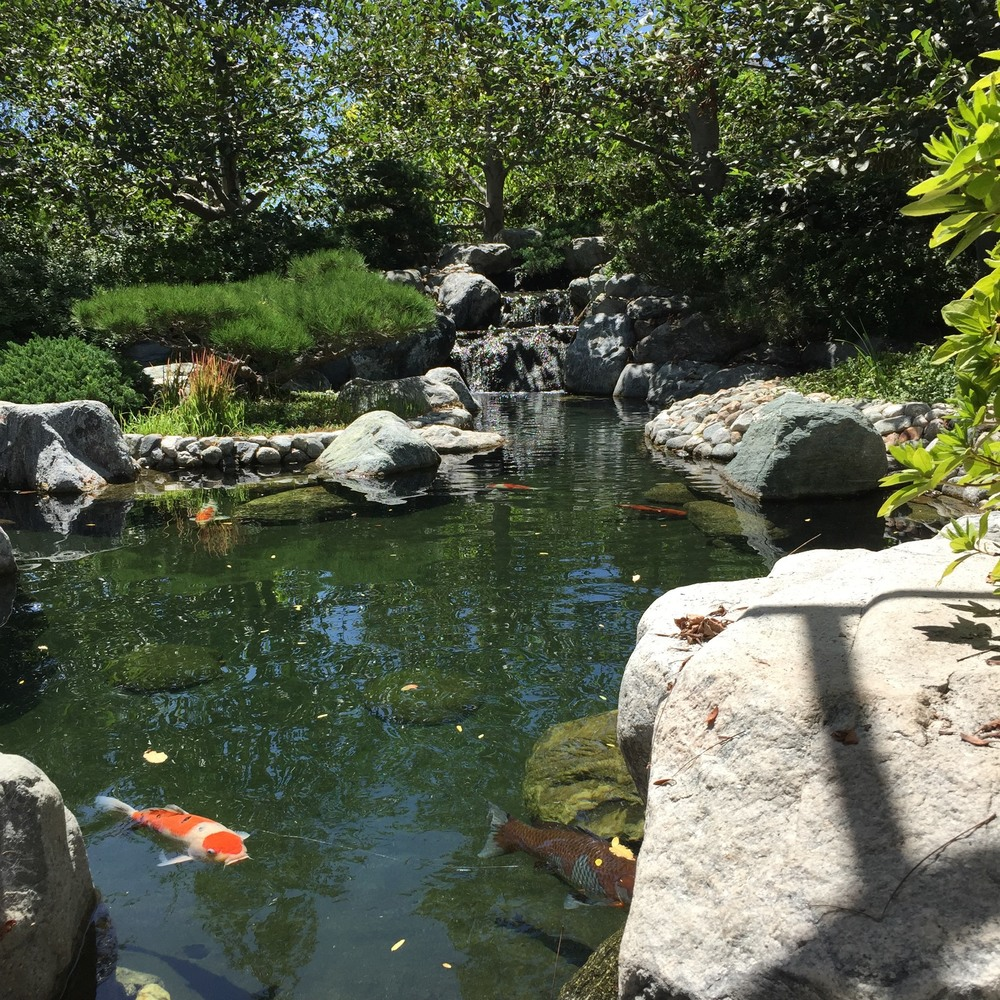 Koi Pond at Japanese Friendship Gardens Balboa Park San Diego, CA