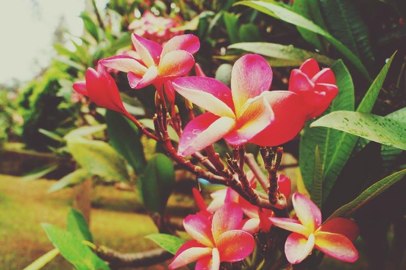 illumelation flowers uganda.jpg