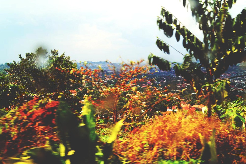 Uganda trees in a blur.jpg