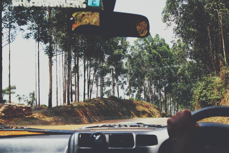 illumelation uganda road trip kibale.jpg
