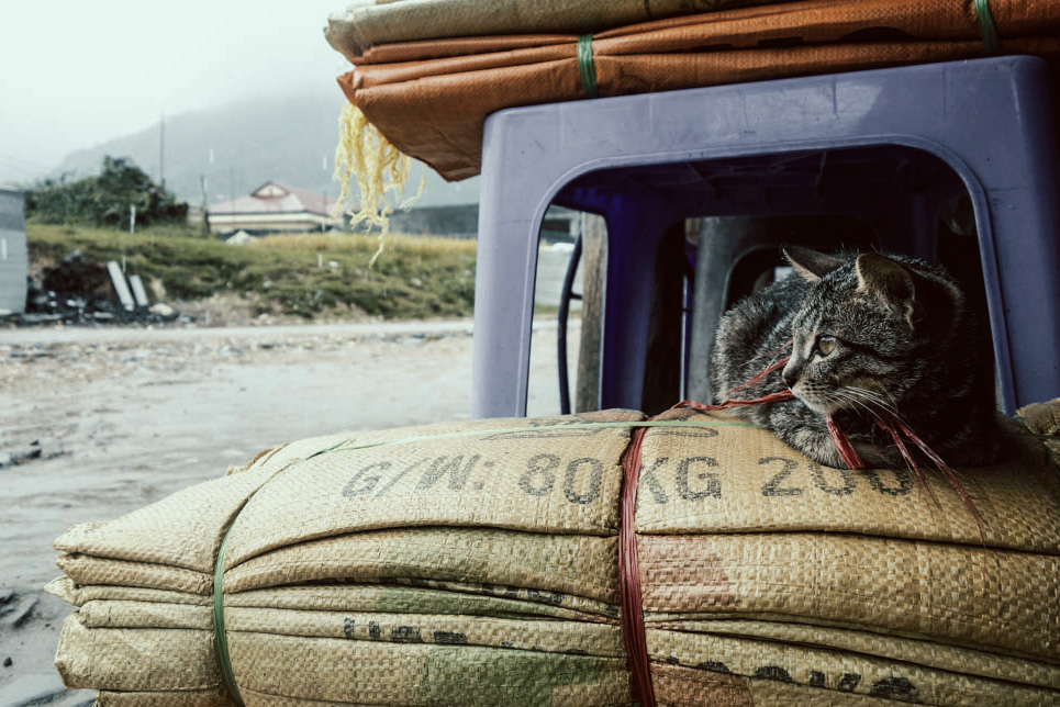 Sapa, Vietnam. Cat on rice. | illumelation.com