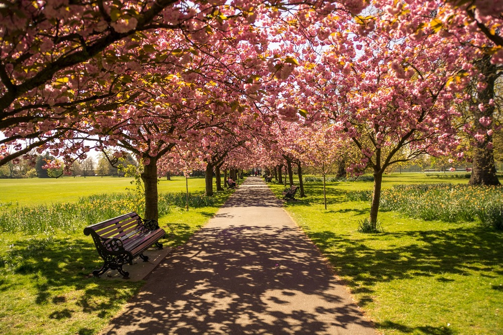 Flowers Blossoming in Park - London in the Spring Travel Guide - illumelation.com