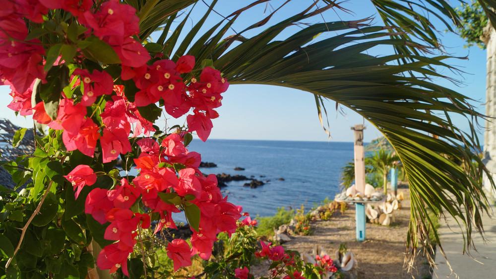 Philippines, Islas De Gigantes - Gigantes Norte Lighthouse Flowers - illumelation