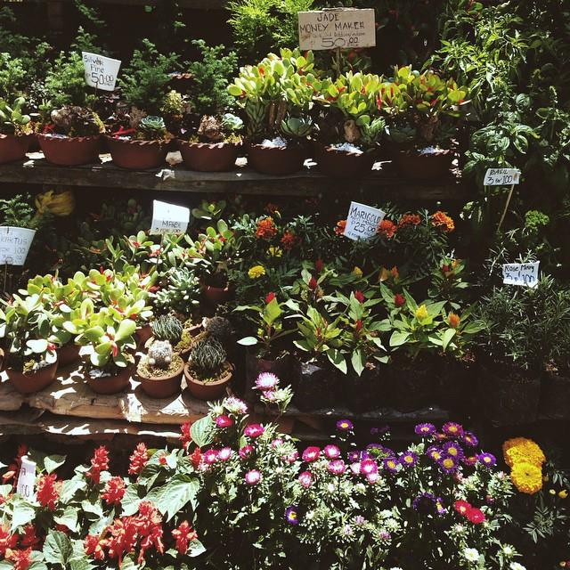 Cute flower & plant markets in Baguio, Benguet Province - Luzon, Philippines