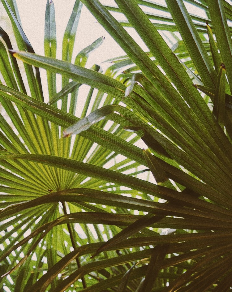 San Casciano Foliage, Tuscany, Italy - illumelation x Cocobay Swimwear.jpg
