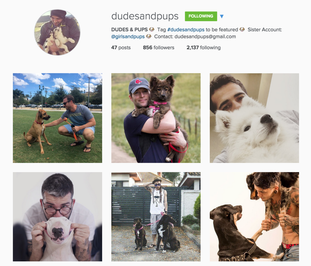 dudes and pups instagram page