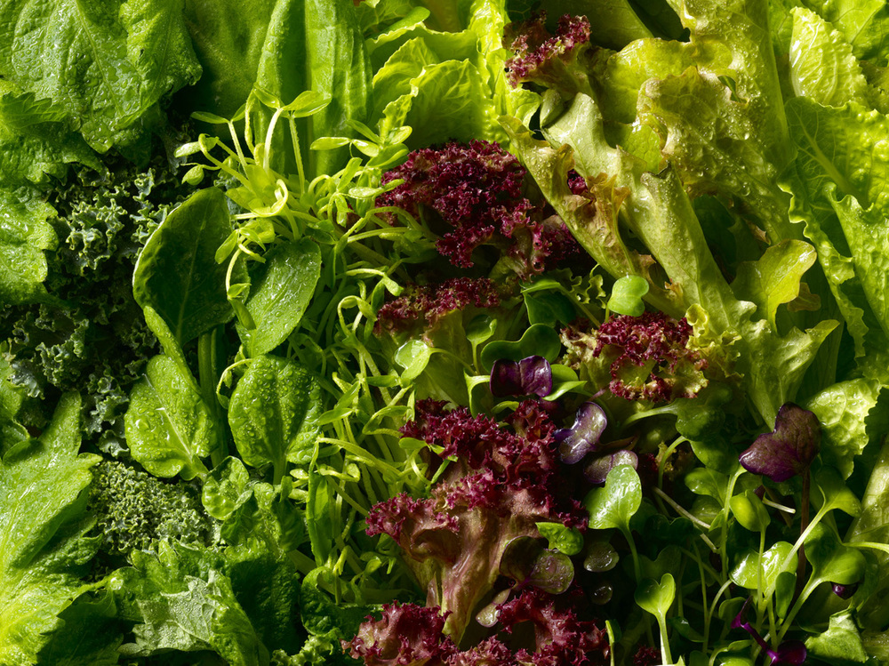 green lettuce, red lettuce, salad, micro greens, kale