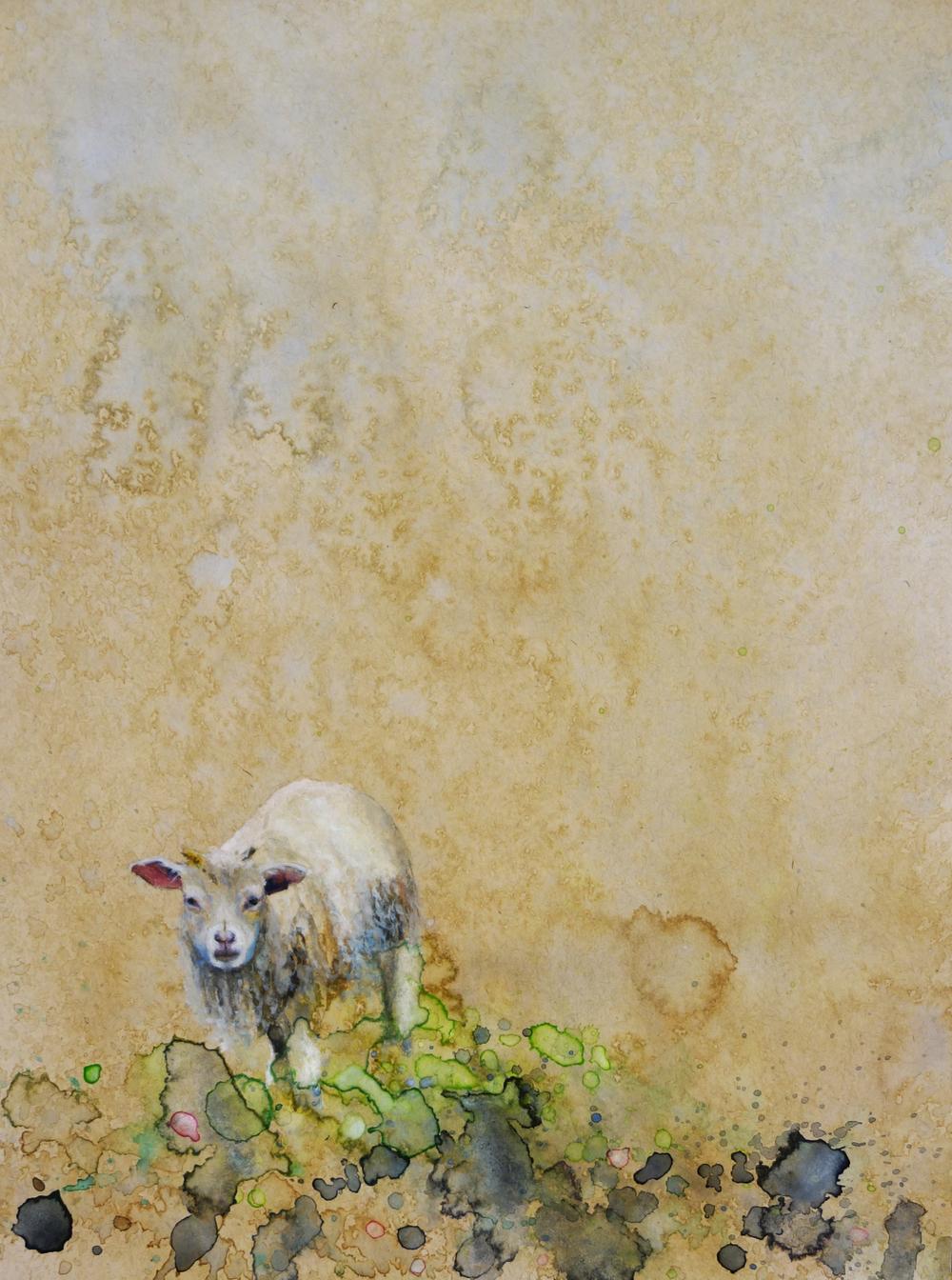 Lamb in Moss