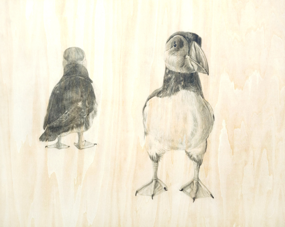 dwood two puffins v2.jpg