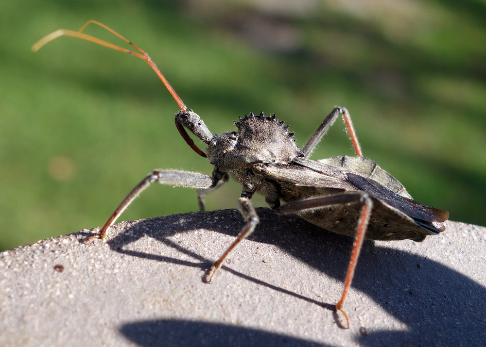 Wheel Bug Nov16 1.jpg