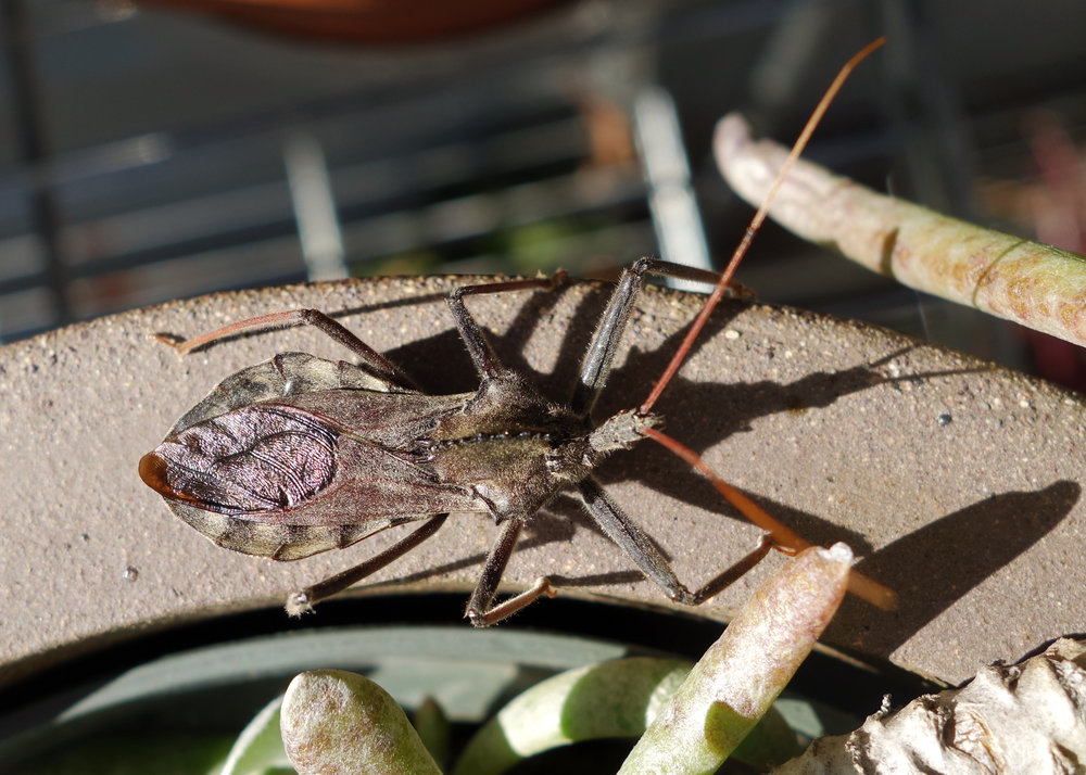Wheel Bug Nov16 2.jpg