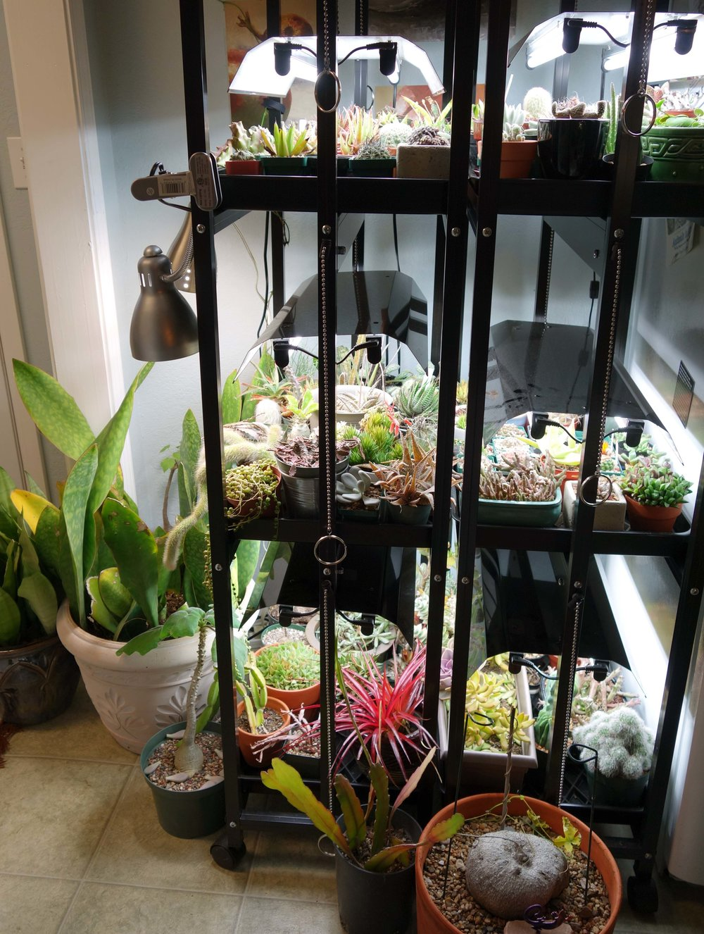 Plant Racks winter 2017 setup.jpg