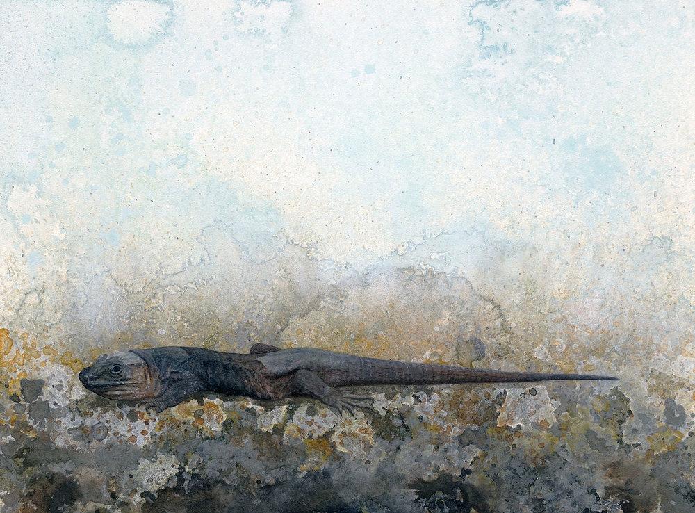Shelby Prindaville Gran Canaria giant lizard lagarto painting artwork Gallotia stehlini artist acrylic