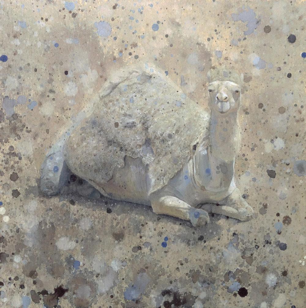 Camelflage Shelby Prindaville camel painting artwork art camouflage.jpg