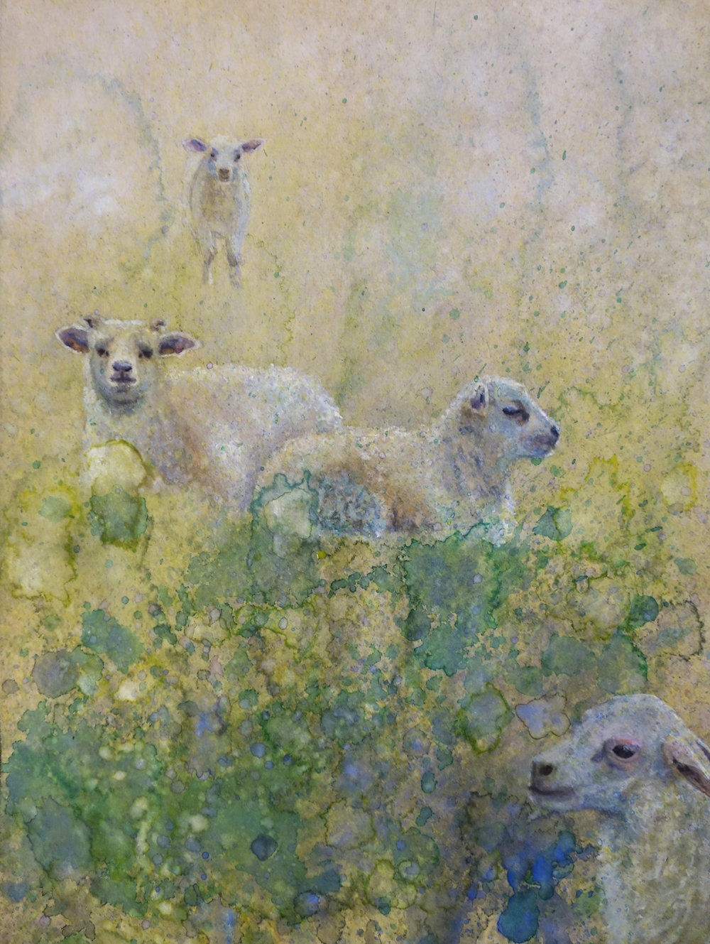 Lambs in Field - Watercolor on recycled paper, 12x9