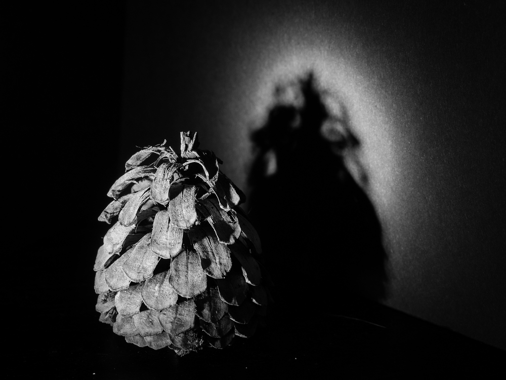 Shadow Play - Copyright 2016 Hannah C. Nesbeda