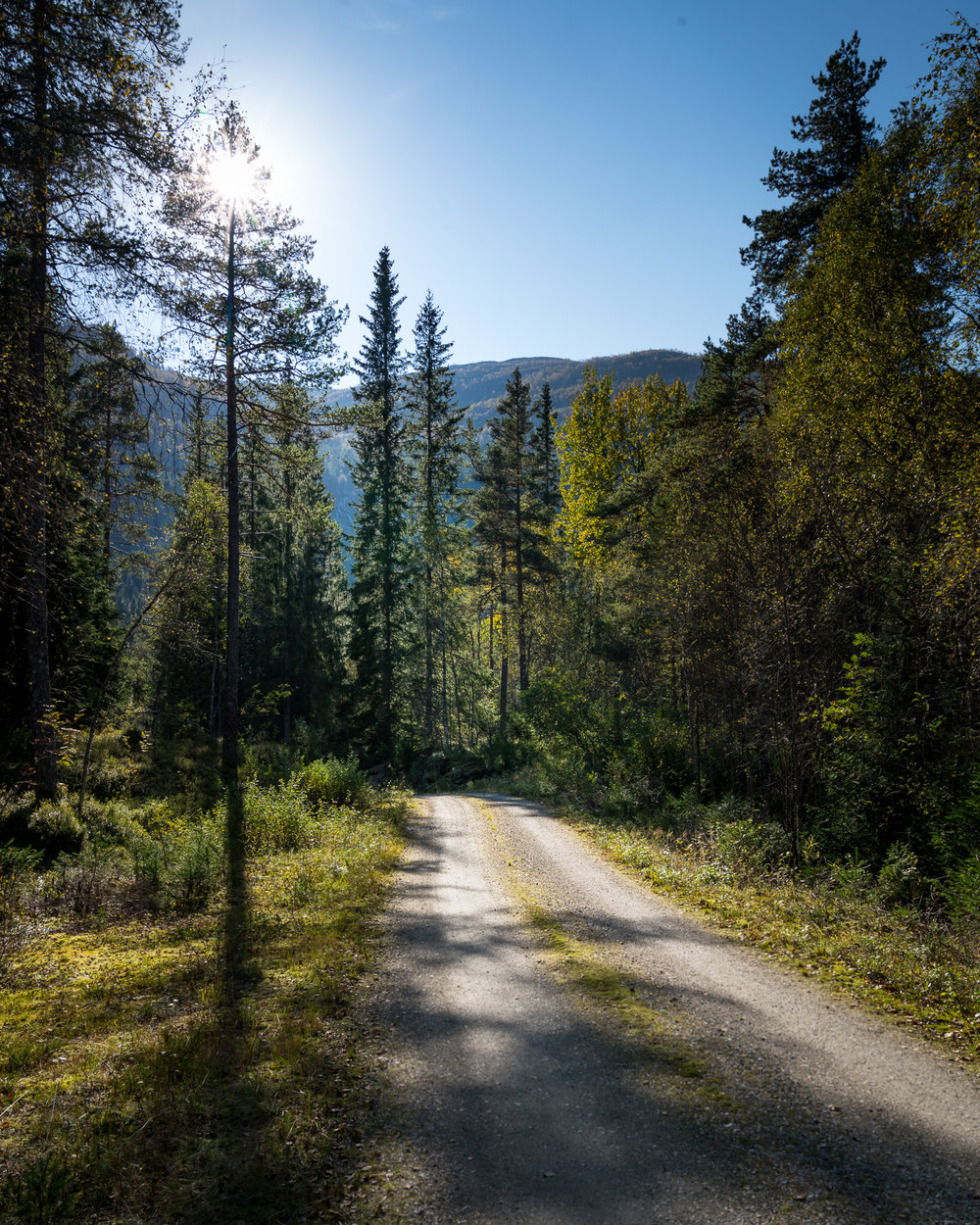 forest road backlit norway_.jpg