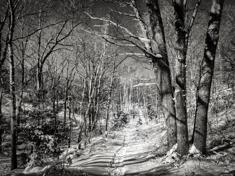 path through snowy woods -Edit.jpg