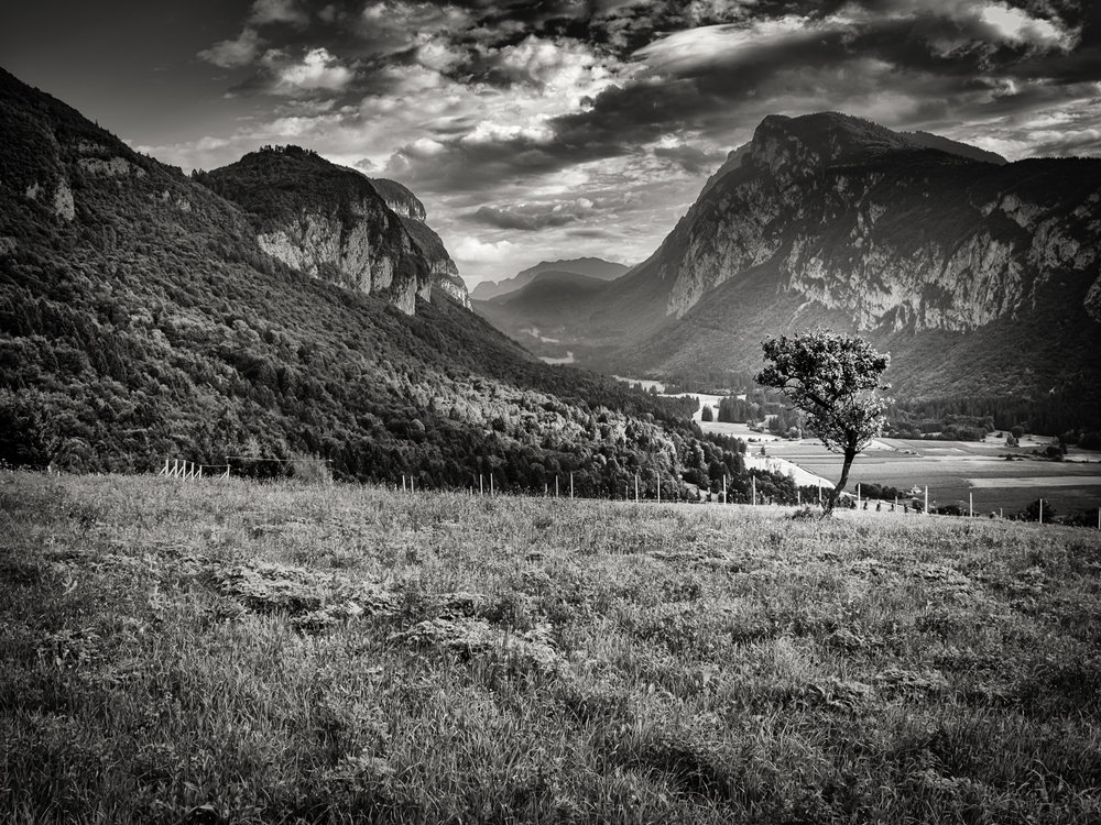 italy field and mountains lone tree -Edit.jpg