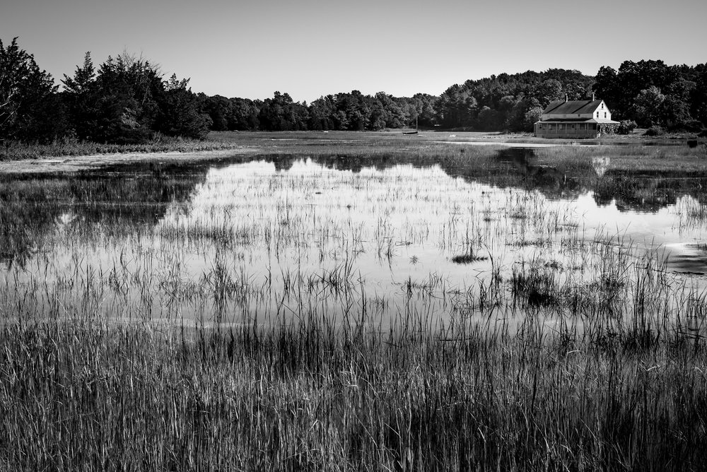 essex salt marsh_.jpg