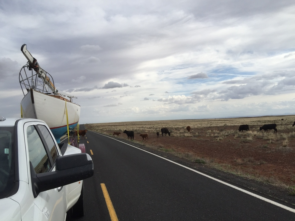 RareBear and some cows near Meteor Crater and the weather was starting to look a little ugly
