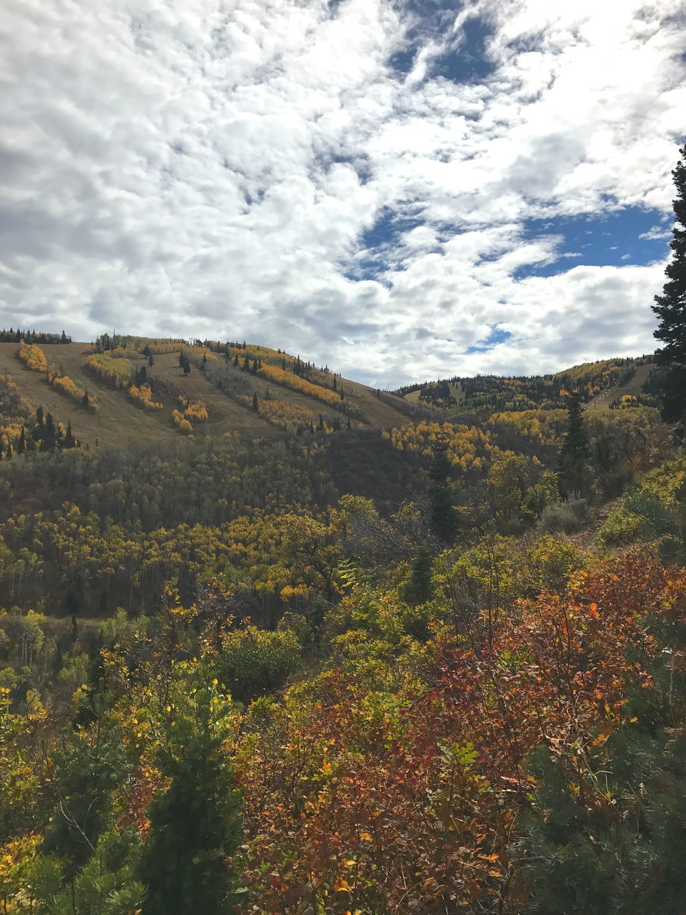 Fall foliage in Park City, Utah