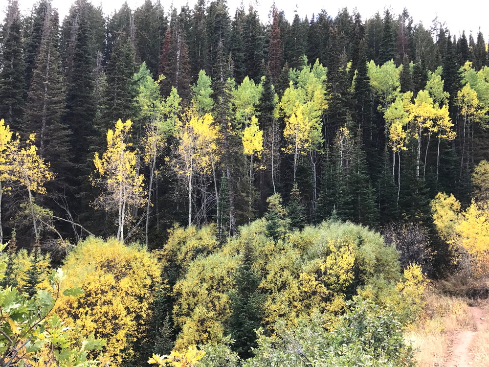 fall foliage in Park City