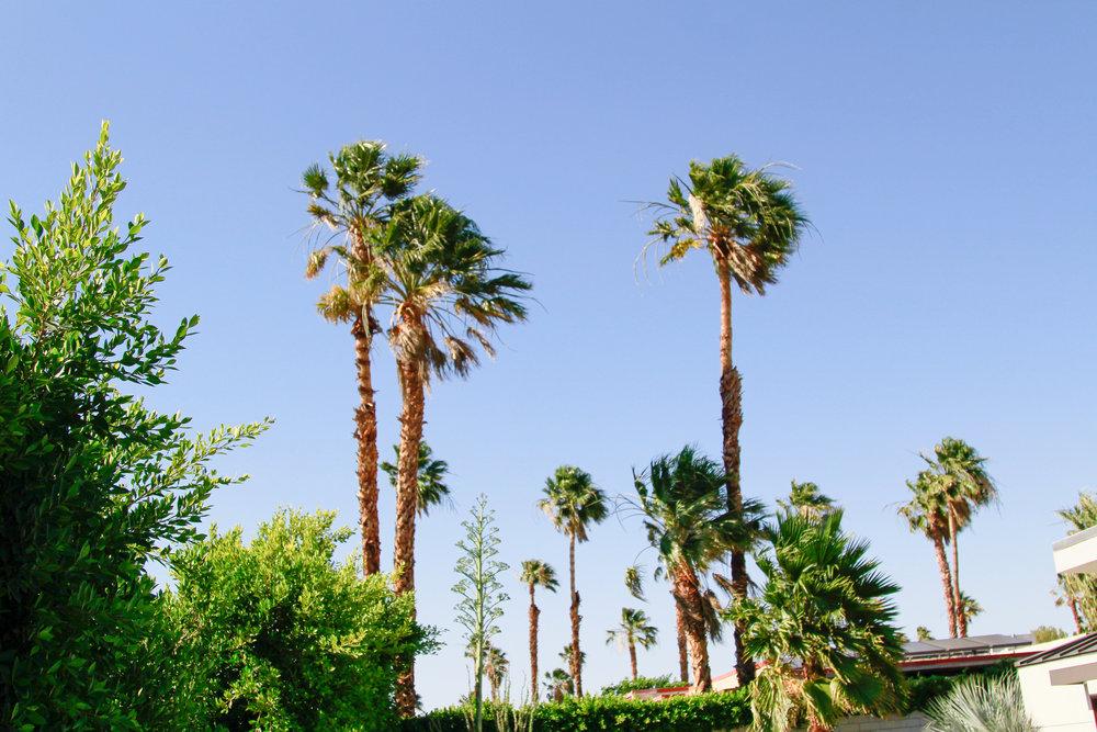 Palm Springs Getaway