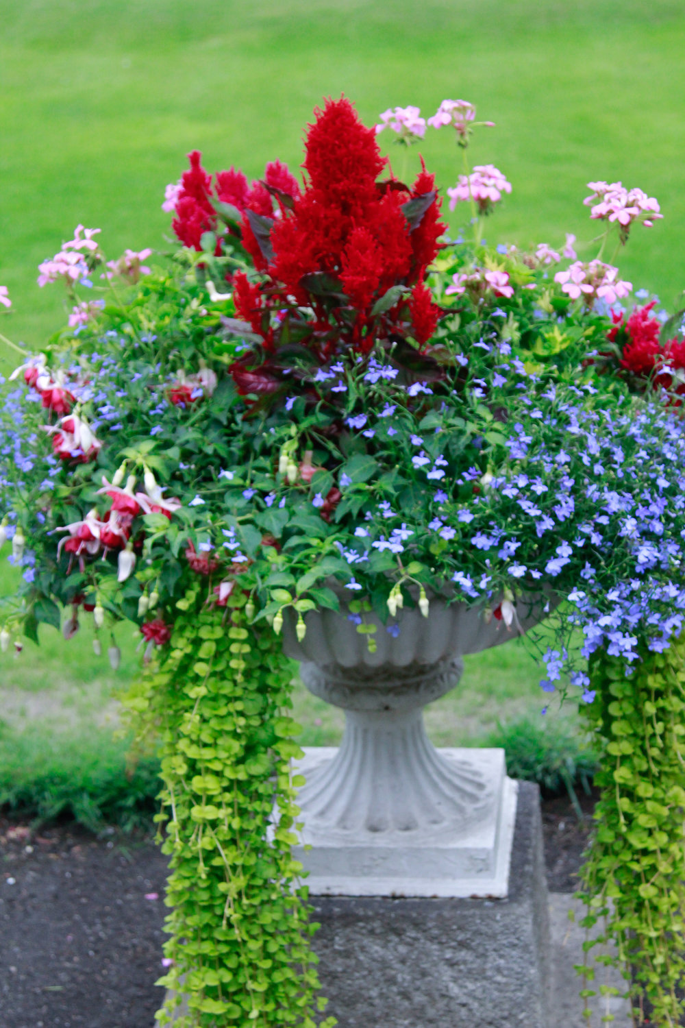 Floral arrangement in St Stephen's Green, Dublin