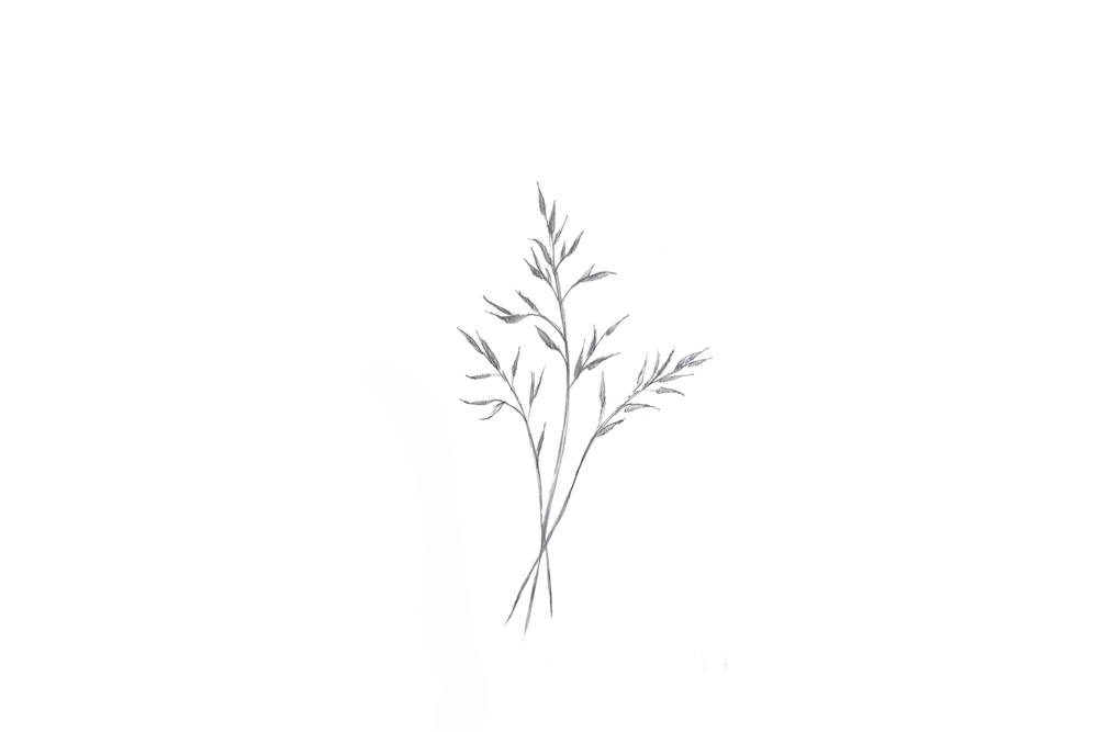 Plant MZ.png