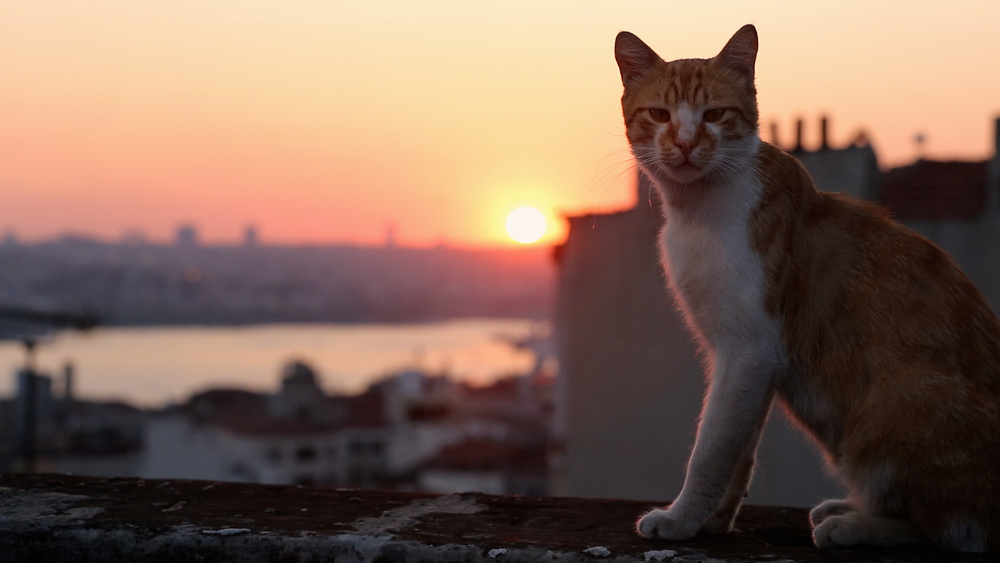 Street cats have long called Kedi home.