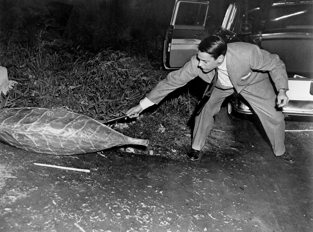Miles Bennell (Kevin McCarthy) examines a pod in the original 1956 film.
