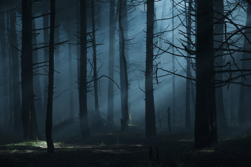 An eerie atmosphere permeates  Feral.