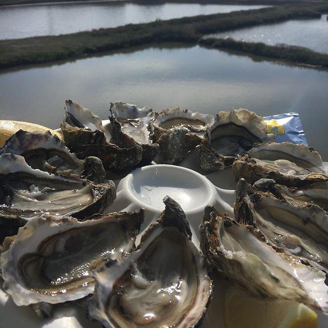 Oysters en France 🇫🇷🥂🌻